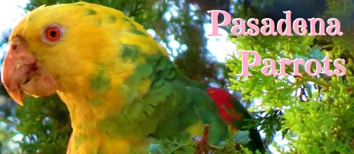 Pasadena Parrots