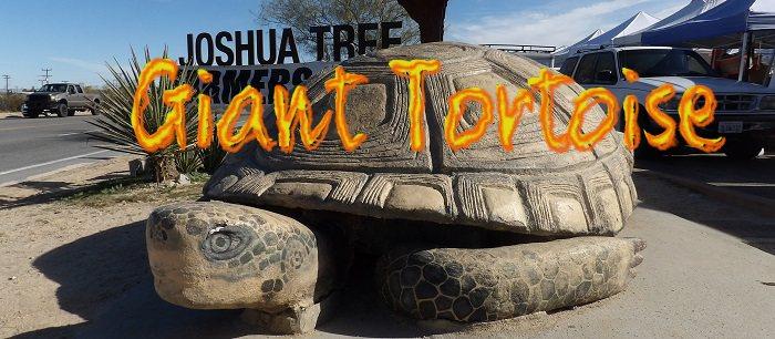 World's Largest Desert Tortoise