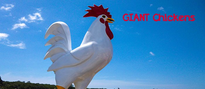 Giant Chickens