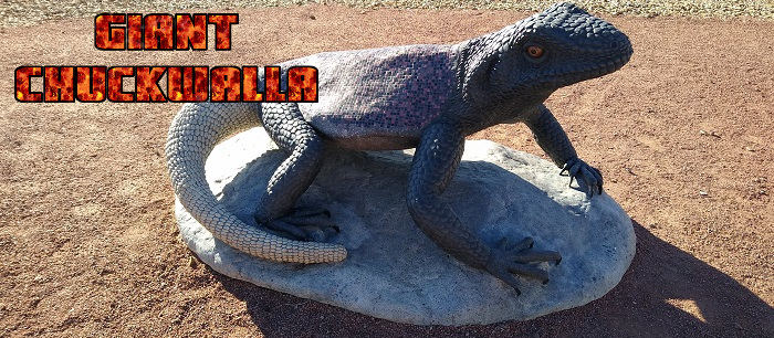 Giant Chuckwalla